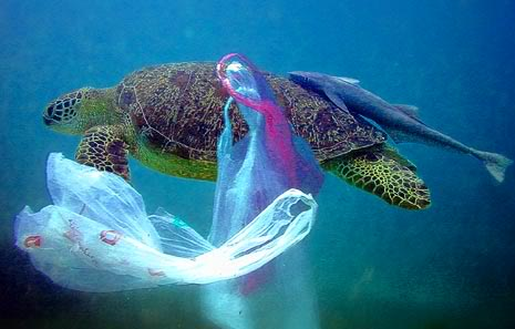 What are long term threats of plastic in our seas?